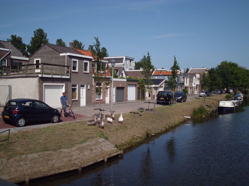 Gänse in Den Helder