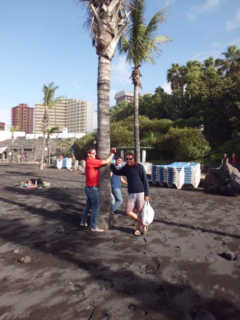 Palmen im schwarzen Sand