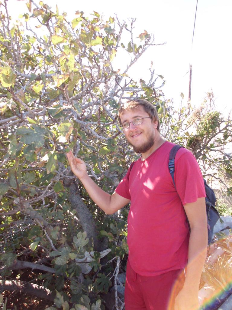 Dattelbaum