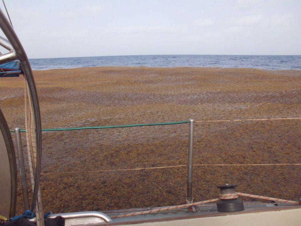 Riesige Pflanzenteppiche bedecken den Atlantik