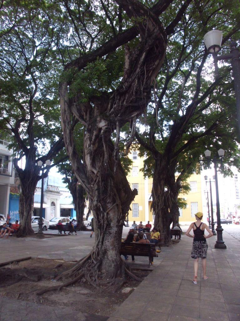 Interessante Bäume