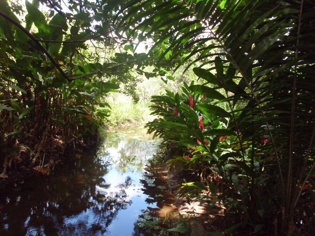 Tropische Vegetation auf Brians Grundstück