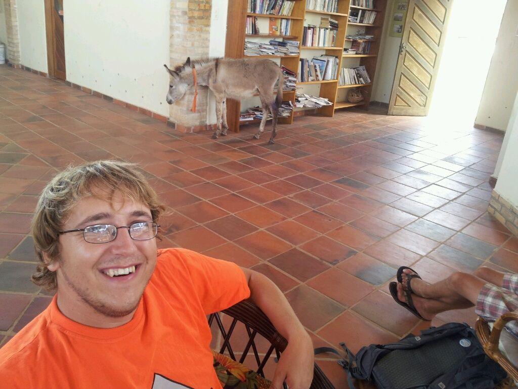 Ein Esel verirrt sich ins Marinagebäude...
