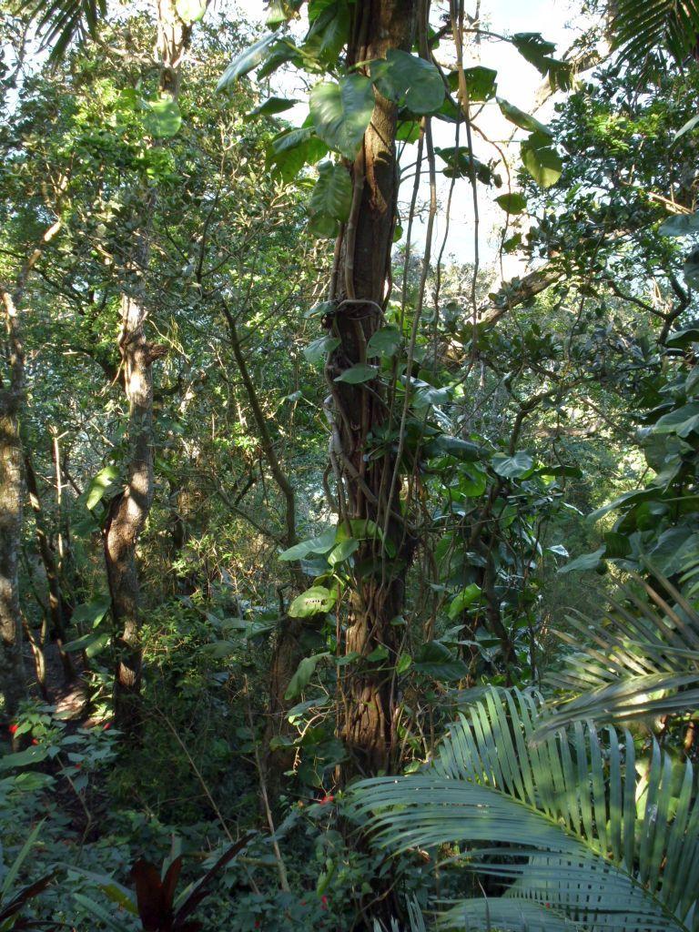 Dschungel 2