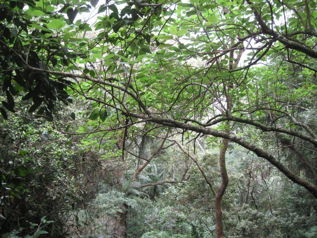 Dschungel 1
