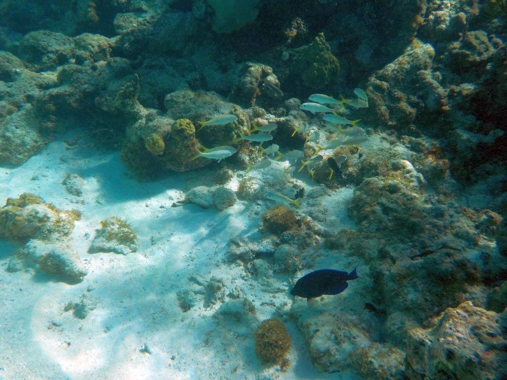 Fische am Riff