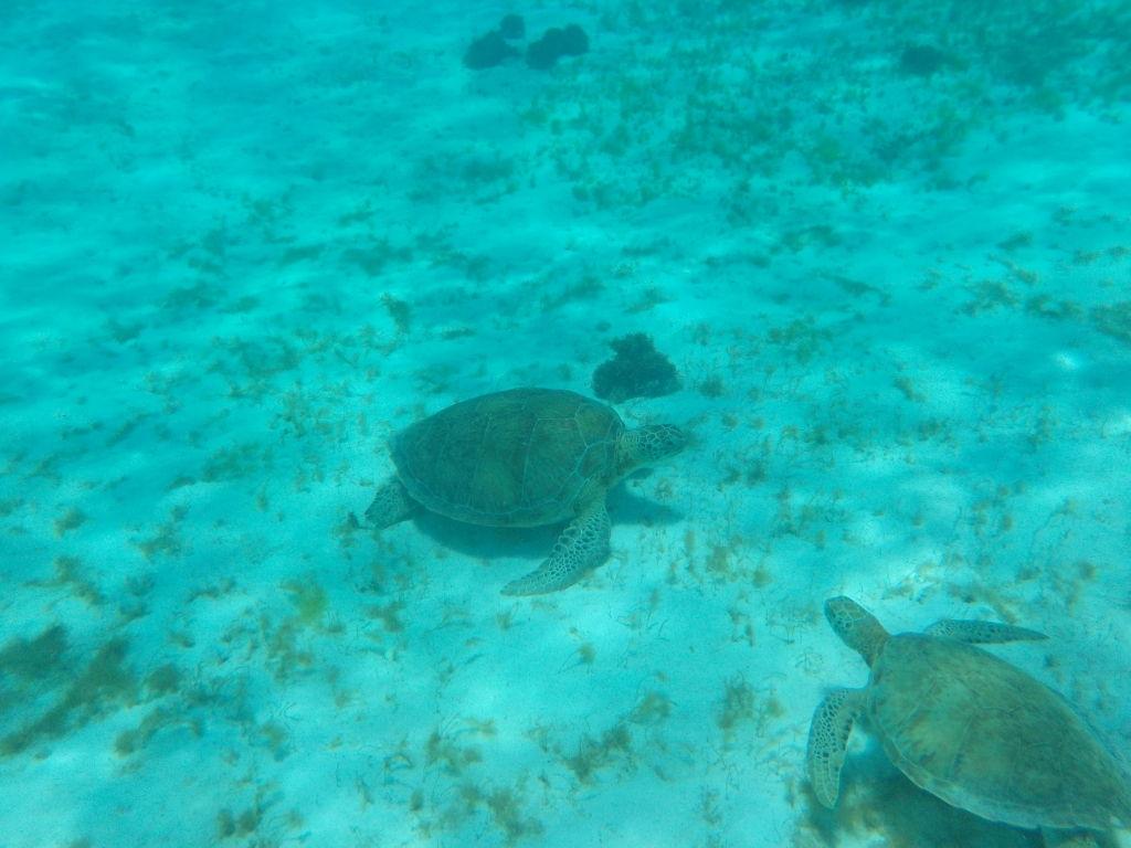 Wasserschildkröten, ...