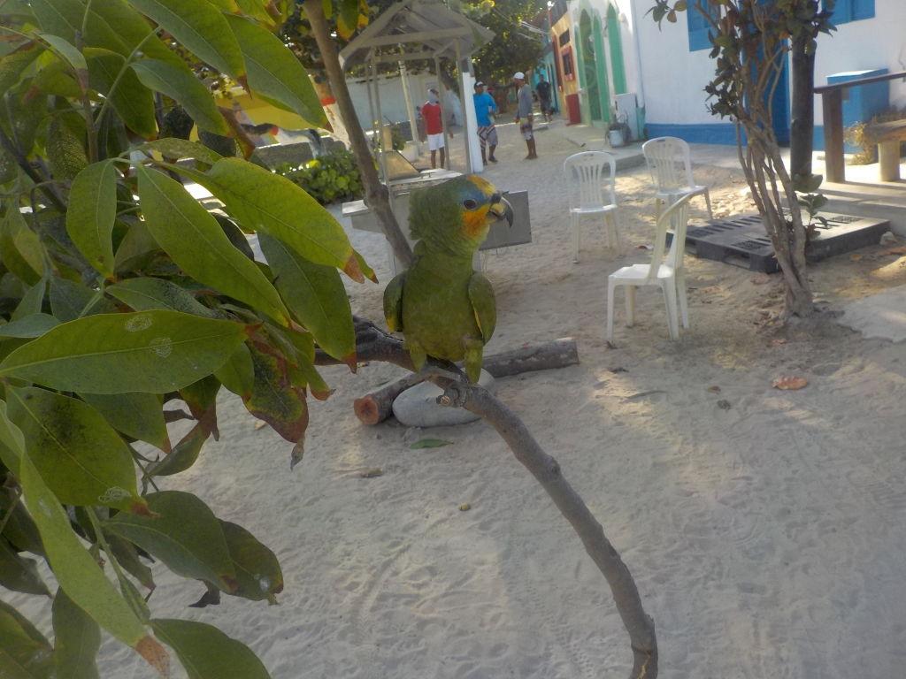 Unser erster frei lebender Papagei!
