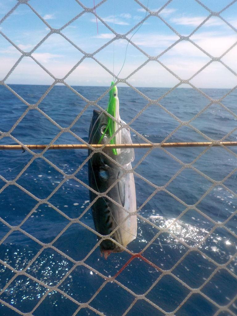 ein großer Raubfisch bringt uns um unseren halben Fang...
