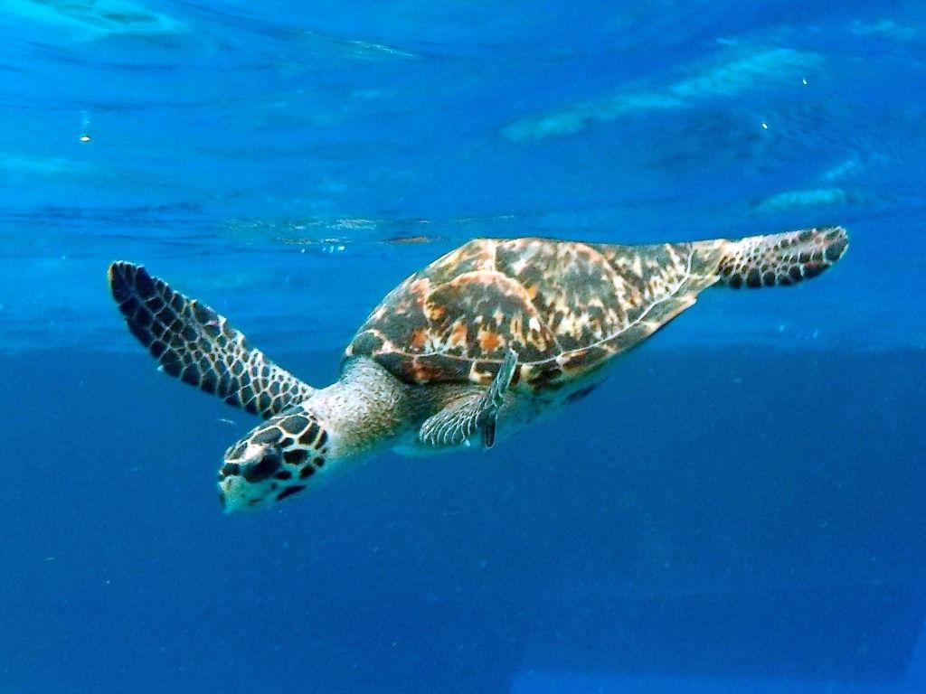 Schildkröten!