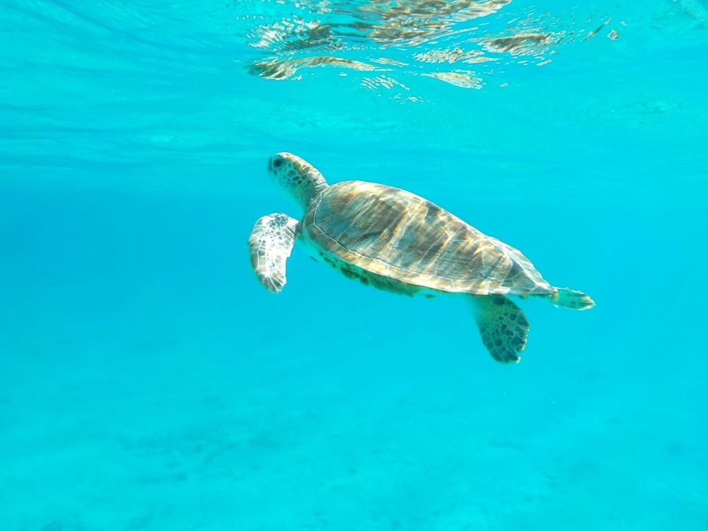 mal wieder Schildkröten