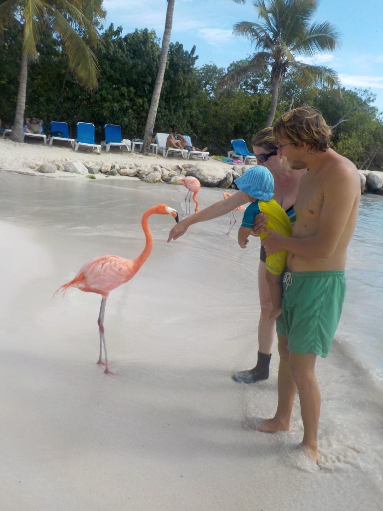 Flamingos zum Anfassen