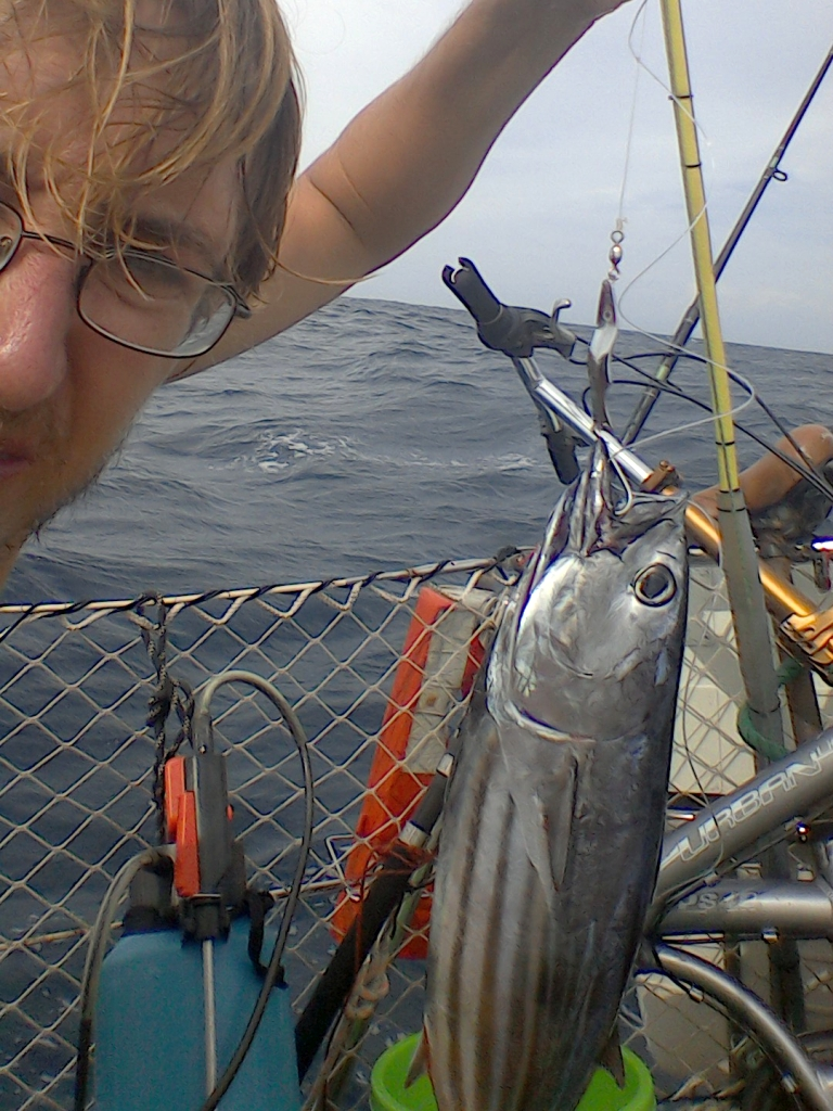 Thunfischspieße im Orginalzustand